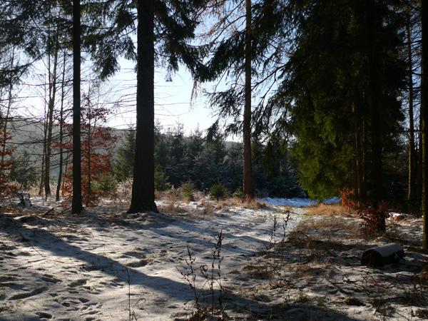 kleines haus am wald uharzunterkunft in dietersdorf bei stolberg. Black Bedroom Furniture Sets. Home Design Ideas